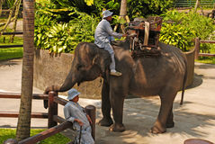 Mahout and elephant at The Elephant Safari Park,Bali Stock Image