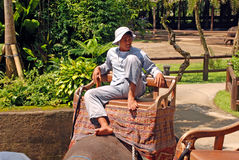 Mahout and elephant at The Elephant Safari Park, Bali Stock Image