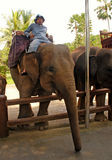 Mahout and elephant at The Elephant Safari Park, Bali Stock Photography