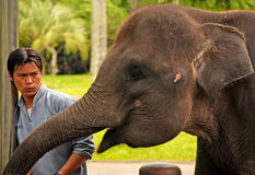 Mahout and elephant at The Elephant Safari Park, Bali Stock Photos