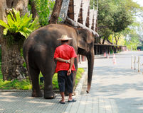 Mahout and elephant Stock Photo