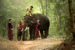 The mahout and the elephant at surin,Thailand stock image