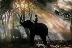 The mahout elephant was royalty free stock photography