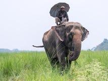 Mahout- eller elefantryttare med paraplyet som rider en kvinnlig elefant fotografering för bildbyråer