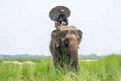 Mahout- eller elefantryttare med paraplyet som rider en kvinnlig elefant royaltyfri foto