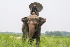 Mahout- eller elefantryttare med paraplyet som rider en kvinnlig elefant arkivfoto
