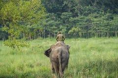 Mahout- eller elefantryttare som rider en kvinnlig elefant royaltyfria bilder