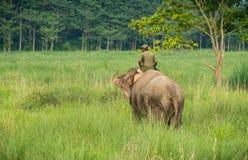 Mahout- eller elefantryttare som rider en kvinnlig elefant royaltyfri fotografi