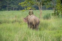 Mahout- eller elefantryttare som rider en kvinnlig elefant arkivbild