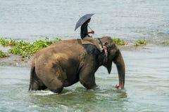 Mahout- eller elefantryttare som rider en kvinnlig elefant i floden arkivbilder