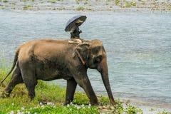 Mahout- eller elefantryttare som rider en kvinnlig elefant i floden royaltyfri foto