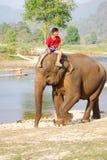 Mahout en olifant royalty-vrije stock foto