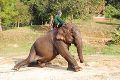 Mahout en olifant stock foto