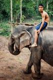 Mahout en zijn olifant die in het bos werken stock afbeelding