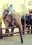 Mahout et éléphant à l'éléphant Safari Park, Bali Photos stock