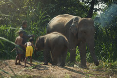 Mahout family Royalty Free Stock Images