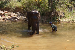 Mahout gives  elephant  bath Stock Photography