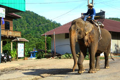 Mahout and his elephant in Chiang Mai, Thailand Royalty Free Stock Photography