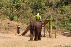 Mahout and  his elephant return Royalty Free Stock Images