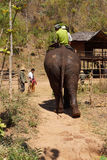 Mahout and  his elephant return Royalty Free Stock Photo