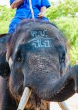 Mahout and his elephant Stock Photos