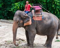 Mahout and his elephant waiting to start the tours with tourists Stock Image