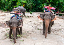Mahout and his elephant waiting to start the tours with tourists Stock Photos