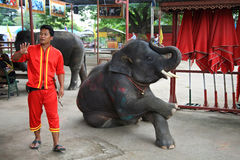 Mahout invites tourists to take a picture with elephant Royalty Free Stock Image