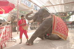 Mahout make an eye contact with his elephant Stock Images