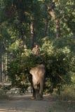 Mahout montant l'éléphant domestique dans la jungle de nepali Image stock