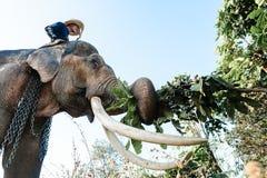 Mahout montant son éléphant au village d'éléphant Images libres de droits
