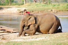 Mahout och elefant royaltyfri bild