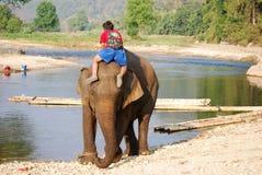 Mahout och elefant fotografering för bildbyråer