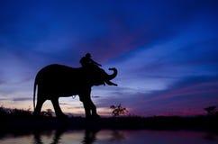 Mahout och elefant royaltyfria bilder