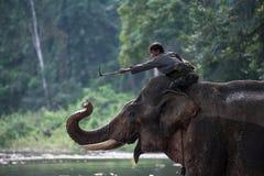 Mahout playing with his elephant raising its trunk. Kanchanaburi, Thailand - February 27, 2011: Unidentified mahout tames and plays with his elephant raising Royalty Free Stock Image