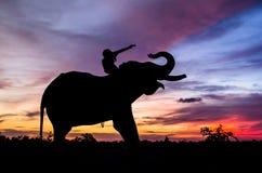 Mahout que monta un elefante en la puesta del sol con el cielo vibrante Imagen de archivo
