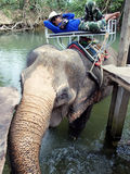 Mahout rests on an elephant. KO CHANG, THAILAND - JANUARY 15.2013: mahout rests on an elephant Royalty Free Stock Image