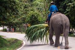 Mahout ride an elephant Royalty Free Stock Photo