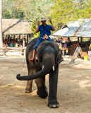 Mahout ride elephant and elephant is dancing Stock Photography