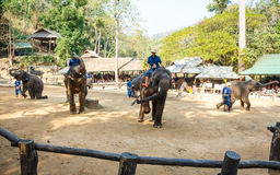 Mahout ride elephant and elephant is dancing Royalty Free Stock Image