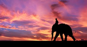 Mahout ride elephant. Stock Image