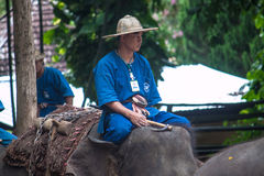 Mahout rides on elephant Stock Photos