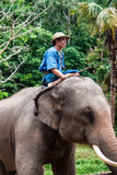 Mahout rides an elephant Royalty Free Stock Photography