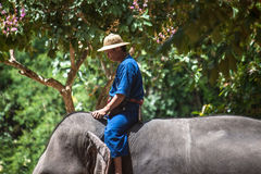 Mahout rides an elephant Royalty Free Stock Images