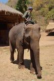Mahout rides his elephant Royalty Free Stock Photo