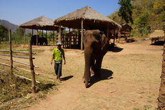 Mahout rides his elephant Stock Image