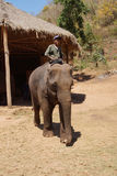 Mahout rides his elephant Stock Images