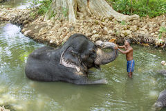 A mahout rides his elephant in the river Royalty Free Stock Photography