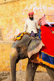 Mahout riding decorated elephant on the cobblestone path to Ambe Royalty Free Stock Photography