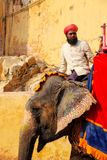 Mahout riding decorated elephant on the cobblestone path to Ambe. R Fort near Jaipur, Rajasthan, India. Elephant rides are popular tourist attraction in Amber Stock Photos